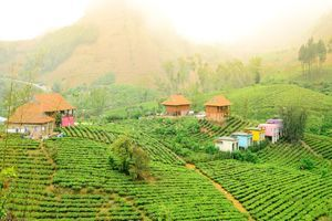 Moc Chau Arena Village